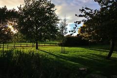 Chalkwell Park. (Owen Schooley) Tags: park lighting wood uk blue trees light england sky tree green nature grass leaves rock contrast canon lens wooden leaf pond rocks shadows bright walk clean sunburst chalkwell 60d