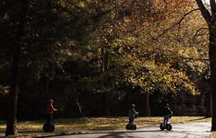 Away from It All (Dan Holtmeyer) Tags: trees light leaves forest woods missouri segway ozarks