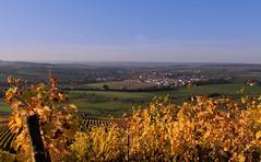 Blick nach Bitzfeld (matthiashn) Tags: germany geotagged vineyard weinberg badenwuerttemberg hohenlohe bitzfeld lindelberg canonpowershotg16