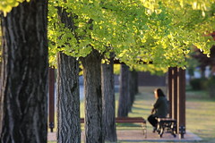 in Autumn (HDH.Lucas) Tags: autumn trees people nature leaves lucas cannon gaze