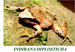 "frog 1 • <a style=""font-size:0.8em;"" href=""http://www.flickr.com/photos/109145777@N03/10940805895/"" target=""_blank"">View on Flickr</a>"