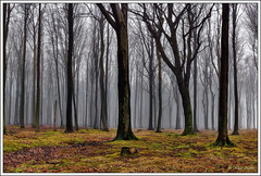 Herbstwald - 16111301 (Klaus Kehrls) Tags: herbst natur landschaft wälder blinkagain bestofblinkwinners blinksuperstars flickrstruereflection1 flickrstruereflection2 flickrsfinestimages1 flickrsfinestimages2 flickrsfinestimages3