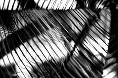 RISCOS -  (10) (ALEXANDRE SAMPAIO) Tags: light luz linhas brasil arte imagens mosaico contraste fractal beleza colagem formas desenhos franca reflexos fantstico espelhos ritmo volume experimento criao detalhes montagem iluminao geometria realidade labirinto formao irreal cubismo tridimensional riscos composio multiplicidade recortes criatividade estrutura imaginao esttica pontodevista possibilidade experimentao caleidoscpio fragmentos deformao inteno mltiplo fragmentao transcendncia irrealidade desenhodeluz alexandresampaio intencionalidade