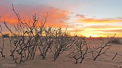 كشته desert صحراء (aldaeys) Tags: sunset desert 2010 كشته تصوير عام صحراء 1435 2013 skaka abdulwahed aljouf الجوف سكاكا مكشات الغضا سلفرادو عبدالواحد الدايس aldaeys عذفاء عذفا silvrado