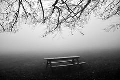 inactivity (Claudia Gaiotto) Tags: life trees monochrome fog waiting nebbia immobilismo brumes nebla potd:country=it