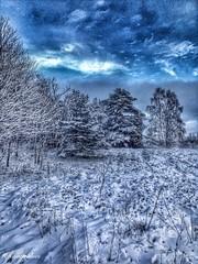 Twilight #2 (auntieblues) Tags: trees winter snow vinter dusk story snö träd skymning berättelse trolled uploaded:by=flickrmobile flickriosapp:filter=nofilter