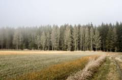 Am 10 Mhlenweg II (Peter Krimbacher) Tags: nebel wiese manipulation wald