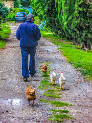 "Mike & the Chickens • <a style=""font-size:0.8em;"" href=""http://www.flickr.com/photos/91306238@N04/12288983744/"" target=""_blank"">View on Flickr</a>"