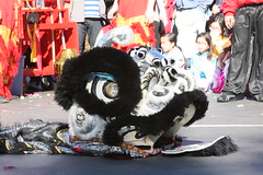 Black and Silver Chinese Lion (shaire productions) Tags: black art asian japanese artwork traditional chinese creative lion style creation korean oriental liondance guardianlion