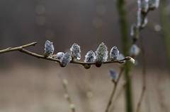 In a row (Lisa Josefsson) Tags: water forest drops spring woods growing