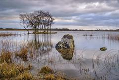 Fenloe Lake. Landscape view (irishman67) Tags: fenloughlake lake newmarketonfergus countyclare ireland winter trees water tranquil nature tree light fenloelake fenloe
