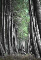 La courbure - Explore (11/03/2017) (david49100) Tags: 2017 maineetloire seichessurleloir arbres d5100 mars nikon nikond5100 trees