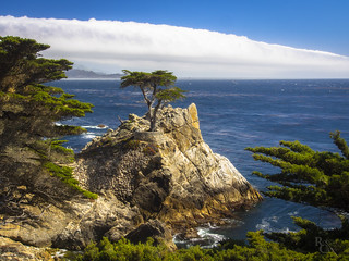 Lone Cypress Sea and Sky