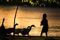 niñez (julyyale) Tags: sombras pato contraluz silhouette backlight duck boy niño jugar niñez canont5i