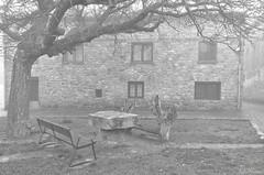 Nostalgia (Txemari Roncero) Tags: parque arquitectura arquitecture rincón niebla arbol tree banco banch bn blancoynegro bw blackandwhite txemarironcero txemari nikon nikond7000 tokina1224