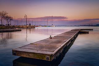 duck on a dock