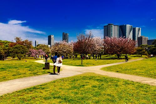 At Hama-rikyu Gardens in Tokyo : 浜離宮恩賜庭園にて