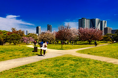 At Hama-rikyu Gardens in Tokyo : 浜離宮恩賜庭園にて (Dakiny) Tags: 2017 spring april japan tokyo chuo chuoward park garden hamarikyugardens city street outdoor plant tree flower cherry blossom cherryblossom people lanscape nikon d7000 sigma 1770mm f284 dc macro os hsm sigma1770mmf284dcmacrooshsm nikonclubit
