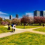 At Hama-rikyu Gardens in Tokyo : 浜離宮恩賜庭園にて thumbnail