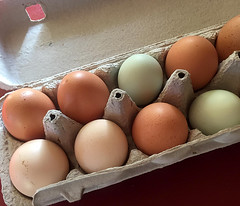Eggs from our Chickens (Églantine) Tags: eggs oeufs couleurs colours joyeusespâques happyeaster naturesdyes eggcarton 2017