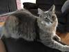 iPhone 3296 (mary2678) Tags: tewksbury massachusetts ma kitty cat chele