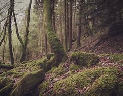 Moss Forest (Thos A.) Tags: forest wood moss trees rock mystic morvan burgundy forêt bois arbres mousse pierres calm calme quiet canon eos1200d nature natur samyang