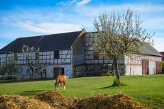 Frühling auf dem Bauernhof (berndtolksdorf1) Tags: deutschland thüringen bauernhof pferd jahreszeiten frühling outdoor farm