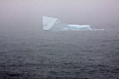 Iceberg in the North Atlantic (LongInt57) Tags: ice iceberg cold spring floating water ocean atlantic newfoundland canada sea white grey gray blue fog raining
