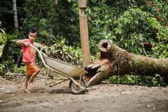 Aldeia Guarani_Foto de AF Rodrigues_114 (AF Rodrigues) Tags: afrodrigues aldeiaguarani guarani paraty rj riodejaneiro brasil bemquerer br programaproíndio uerj aldeiaindígina povodafloresta populaçãotradicional índio indígina foratemer carrinhodemão carrinho criança