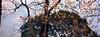 寄畅园Jichangyuan (飞鸿留影) Tags: xpan hasselblad fujifilm superebc fujinon 45mm 90mm 454 904 35mmfilm film filmphotography analog positive negative negativefilm colorfilm wuxi china rangefinder nikonsupercoolscan9000ed analogphotography kodak kodakfilm kodakphoto architecture jichangyuan huishan 寄畅园 园林 ektar ektar100 bokeh plumblossom plumflower flowers nature landscape color flickraward