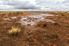 Quencing the red earth (Ralph Green) Tags: brokenhill menindee newsouthwales clouds grasses landscape redearth water