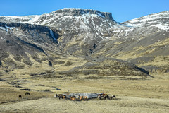 The land of mountains and horses.... (powerfocusfotografie) Tags: iceland nature mountains horses outdoors spring snow henk nikond7200 powerfocusfotografie