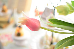 pink tulip (*tmk*) Tags: bokeh sony paste tulip pink styling spring flower happy color fresh beginning