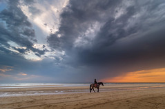 Rider on the Storm II (martijnvdnat) Tags: rain summer alone animal beach climate clouds coastline equestrian equine evening girl horizon horse horseback jockey lowtide nature outdoors ride rider riding sand sea silhouette sky storm sun sunlight sunset tide tidepool water wave weather
