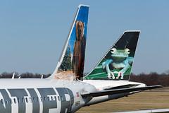 N951FR and N221FR Tails (AeroPX) Tags: aeropx airbusa319 airbusa320 bennythebrownbear bugsythetreefrog caryliao ewing frontierairlines kttn n221fr n951fr nj newjersey ttn trentonmercercountyairport