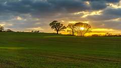 Riding into the sunset (TanzPanorama) Tags: countryside field landscape scenic england kent sunset hill hillside horizon horses rider horserider tanzpanorama sonya7ii a7ii fe2470mmf4zaoss sel2470z sky clouds dusk glow sunlight yellow golden sun