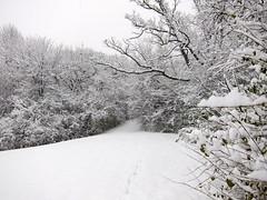 IMG_2820 (sjj62) Tags: s90 snow snowscape lith lakeinthehillsil winter winterscape