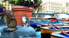 #Cats #Boats #Floating #Sea #Coast #Cat #Italy #Italia #Napoli #Naples #Culture #Travel #Vacation #World #Tourist #Backpacker #Backpacking (nenadbozic1) Tags: backpacking vacation world boats italia coast tourist travel backpacker sea cats culture italy floating naples cat napoli