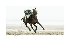 Touquet Audi Polo Cup (Emmanuel DEPARIS) Tags: cheval horse competion le touquet haut de france pas calais équitation emmanuel deparis nikon d4 plage beach