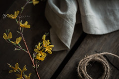 101/365 (shoot-it-now-Nadeen) Tags: nadeenflynnphotography linen stilllife woodenbox yellowblossoms