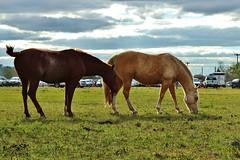 17424904_10210992993933349_5559198887001171213_n (aalonsofotografia) Tags: caballos campo fotografia nubes cielo pueblo