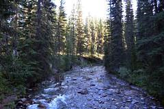 Johnston Creek (pokoroto) Tags: johnston creek バンフ banff アルバータ州 alberta canada カナダ johnstoncanyon 8月 八月 葉月 hachigatsu hazuki leafmonth 2016 平成28年 summer august