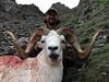 Alaska Dall Sheep Hunt & Moose Hunt 21