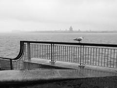 (Pea Jay How) Tags: fog rain must merseyside liverpool birkenhead fencefriday hff friday promenade railing rails rail seagull full riverside mersey river fence