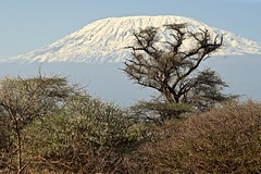"""True At First Light"" (The Spirit of the World) Tags: mountain mtkilimanjarp snow snowkapped trees bush africa eastafrica kenya amboseli landscape safari morning gamedrive earnesthemingway light wild nature wilderness"