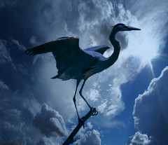 Heron on a Branch (beachpeepsrus) Tags: birds water westcoast heron huntingtonbeachcalifornia light clouds california egret