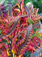 Flower flames - better version (Remco Wessels) Tags: flowers zuidermrkt flames colors colorful nofilter red yellow s8 flowerfusion