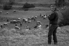 Shepherd (Il Condor (100K+ views)) Tags: pastore pecore gregge montagna pascolo
