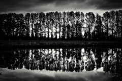 Naturalbarrier- (toniertl) Tags: toniphotoxoncouk naturalbarrier trees reflection standingtogether backlit sunbehind darkwater riverthames canal slowwater stormyclouds