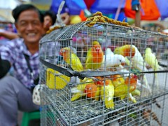 bird vendors (DOLCEVITALUX) Tags: philippines birdvendors vendors bird birds outdoor scenes images life